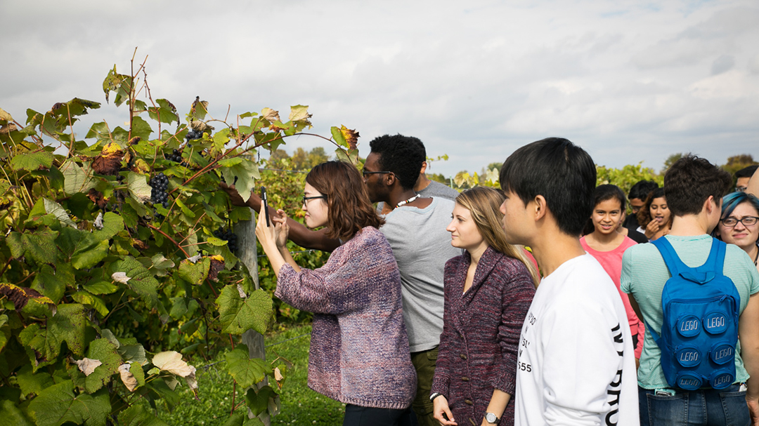 Students examine grapevines at Cornell's NYS Agricultural Experiment Station in Geneva, NY